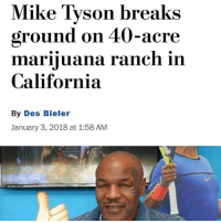 Article 👉 @420stocks: Mike Tyson breaks  ground on 40-acre  marinluana ranch in  California  By Des Bieler  January 3, 2018 at 1:58 AM Article 👉 @420stocks