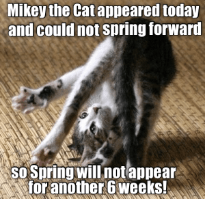 Memes, Spring, and Today: Mikey the Cat appeared today  and could not spring forward  sO Spring will notappear  for another 6 weeks!