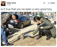 Miley Cyrus, True, and Good: miley sinus  @allstn  + Follow  is it true that you've been a very good boy