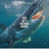"Fucking, Life, and Memes: MILLIONAIRE MENTOR  BE A  FUCKING  SHARK If you want to succeed in business, BE a shark and think like a shark 🦈 - It takes years of hard work, vision, determination, and unbridled passion to be a successful business owner. While many entrepreneurs are aware of that, the one key element many must brush up on is the underlying financials of the business, especially if you're trying to bring new investors on board. - If you are looking to get an investor interested on your business check this out: ✔️Articulate your idea. Explain your idea as clear and quick as possible. Like anything in life, you must capture an investor's attention within five seconds, or forget it. ✔️Know your numbers. If you come into a room of potential investors without knowing the numbers, just turn around and walk out. You must present the investors with a fair valuation. Simple. ✔️Prove sustainability. Educate your investors on how you plan to sustain your product, your idea, and your company moving forward. Is it scalable? Investors will typically gauge return on investment (ROI) based on the forward earnings potential. ✔️Always be Honest. The very moment you begin to leave out key details, or attempt to ""play games"", investors will lose interest. - Ok guys, I hope this pointers are useful! Drop a comment below and let me know what y'all think.👇 - sharks success millionairementor"