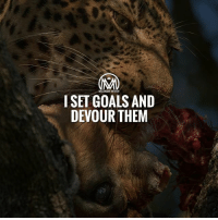Goals, Memes, and Success: MILLIONAIRE MENTOR  ISET GOALS AND  DEVOUR THEM The week is almost over! How are your goals coming along?comment below the goals you have achieved this week!👇 goals success millionairementor