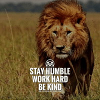 Memes, Being Kind, and 🤖: MILLIONAIRE MENTOR  STAY HUMBLE  WORK HARD  BE KIND  @MILLIONAIRE-M ENTOR *double tap* and tag a friend 👇below who needs to see this! 🐼 millionairementor