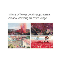 Goals, Wtf, and Citi: millions of flower petals erupt from a  volcano, covering an entire village CITY GOALS WTF