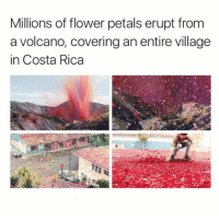 Dank, Costa Rica, and Covers: Millions of flower petals erupt from  a volcano, covering an entire village  in Costa Rica