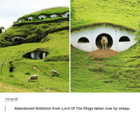 Lord Of The Rings Tumblr: minardil  Abandoned Hobbiton from Lord of The Rings taken over by sheep