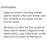 DONKEH???: mindtheglass:  today we found a lost king charles  spaniel whose collar said donkey and  he's currently at my house until we  find his owner.  we found out after the first couple of  hours that he doesn't respond to his  name unless u say it like shrek, so idk  what kind of human he belongs to DONKEH???
