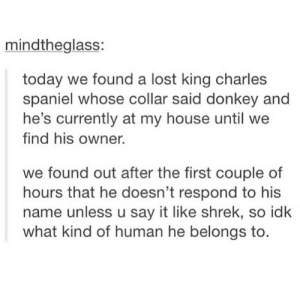 Donkey, My House, and Shrek: mindtheglass:  today we found a lost king charles  spaniel whose collar said donkey and  he's currently at my house until we  find his owner.  we found out after the first couple of  hours that he doesn't respond to his  name unless u say it like shrek, so idk  what kind of human he belongs to