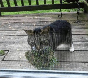 minecraftgender:  monsieurenjlolras:  russiacore: me giving you a heartfelt gift: Patch Of Moss  this is absolutely a witch's familiar gathering ingredients   its a warrior cat making a nest : minecraftgender:  monsieurenjlolras:  russiacore: me giving you a heartfelt gift: Patch Of Moss  this is absolutely a witch's familiar gathering ingredients   its a warrior cat making a nest