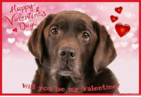 Will you be my valentine?: Mines  ale Wi sou be Valentine Will you be my valentine?