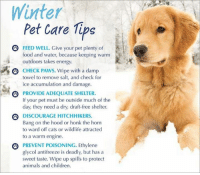 Very very cold outside!: Minter  Pet Care Tips  FEED WELL. Give your pet plenty of  food and water, because keeping warm  outdoors takes energy.  3 CHECK PAWS. Wipe with a damp  towel to remove salt, and check for  ice accumulation and damage.  四PROVIDE ADEQUATE SHELTER.  If your pet must be outside much of the  day, they need a dry, draft-free shelter.  Θ DİSCOURAGE HITCHHIKER  Bang on the hood or honk the horn  to ward off cats or wildlife attracted  to a warm engine.  PREVENT POISONING. Ethylene  glycol antifreeze is deadly, but has a  sweet taste. Wipe up spills to protect  animals and children Very very cold outside!