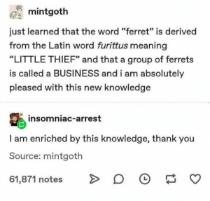 "Ferrets: mintgoth  just learned that the word ""ferret"" is derived  from the Latin word furittus meaning  ""LITTLE THIEF"" and that a group of ferrets  is called a BUSINESS and i am absolutely  pleased with this new knowledge  insomniac-arrest  I am enriched by this knowledge, thank you  Source: mintgoth  61,871 notes  L Ferrets"