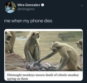 monkeys: Mira Gonzalez  @miragonz  me when my phone dies  Distraught monkeys mourn death of robotic monkey  spying on them