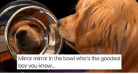 "Memes, Tumblr, and Blog: Mirror mirror in the bowl who's the goodest  boy you know <p><a href=""http://memehumor.net/post/164649653752/celebrate-international-dog-day-with-these-primo"" class=""tumblr_blog"">memehumor</a>:</p>  <blockquote><p>Celebrate International Dog Day With These Primo Doggo Memes</p></blockquote>"