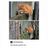 Memes, Saw, and Nest: mischiefandmay  My loafness spilleth over i just saw a little bird making a nest im so proud of it