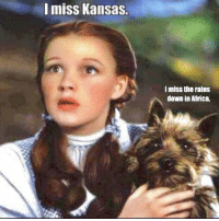 ......... I miss Toto... 😜👍 :v Bahahaha...: miss Kansas.  lmiss the rains  down in Africa. ......... I miss Toto... 😜👍 :v Bahahaha...