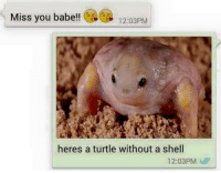 miss you: Miss you babe!!  12:03PM  heres a turtle without a shell  12:03PM