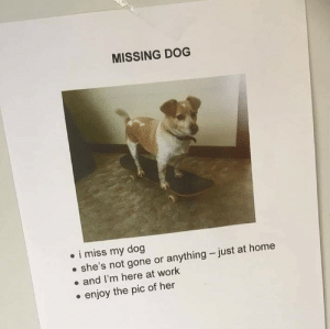 Work, Home, and Wholesome: MISSING DOG  i miss my dog  she's not gone or anything just at home  and I'm here at work  enjoy the pic of her Is this wholesome enough?