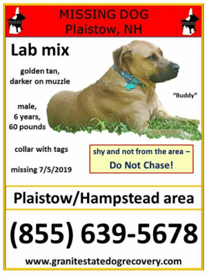 "Memes, Chase, and Lookout: MISSING DOG  Plaistow, NH  Lab mix  golden tan,  darker on muzzle  ""Buddy""  male,  6 years,  60 pounds  collar with tags  shy and not from the area  Do Not Chase!  missing 7/5/2019  Plaistow/Hampstead area  