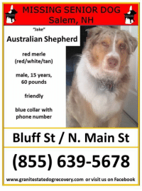 "MISSING SENIOR DOG  Salem, NH  ""Jake""  Australian Shepherd  red merle  (red/white/tan)  male, 15 years,  60 pound:s  friendly  blue collar with  phone number  Bluff St / N. Main St  (855) 639-5678  www.granitestatedogrecovery.com or visit us on Facebook Urgent Missing in Salem NH – ""Jake"" is a male Australian Shepherd, red merle (red, white and tan), 15 years, 60 pounds.  He is a friendly guy and is wearing a blue collar with his phone number.  Missing since 1/23/2018 from Bluff Street and North Main Street.  Please share his flier and watch carefully in Salem NH. Call GSDR 24/7 at (855) 639-5678 with any sightings."
