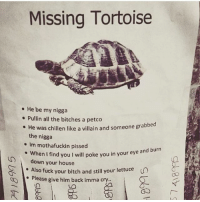 i forever love this post: Missing Tortoise  . He be my nigga  . Pullin all the bitches a petco  He was chillen like a villain and someone grabbed  the nigga  e Im mothafuckin pissed  en i find you I will poke you in your eye and burn  down your house  e Wh  . Also fuck your bitch and still your lettuce  Please give him back imma cry.. i forever love this post