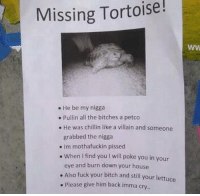 Missing Tortoise!  He be my nigga  Pullin all the bitches a petco  He was chillin like a villain and someone  grabbed the nigga  Im mothafuckin pissed  When find you l will poke you in your  eye and burn down your house  Also fuck your bitch and still your lettuce  Please give him back imma cry.  WW He was chillin like a villian ~Matthew~