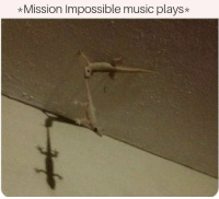 Music Plays: *Mission Impossible music plays*