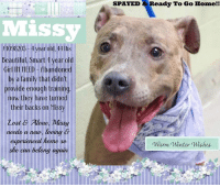 """KILLED :'( - 12/13/2016   To abandon your pet and sabotage her in the process, lousy dog owner! :( Its seems like Missy's old family (if you can even call them that) didn't bother to provide her with much basic training and then they turn around and dump her at a high kill shelter for just being herself when they are actually the ones to blame.... But it's Missy that will pay the price with her life if an experienced home isn't found ASAP. One where Missy can get everything she needs (time, patience, love) and everything she never had (basic training adn consistency). Please help us network this beautiful 4 year old girl for a real chance with people who care.   A volunteer writes: Missy is dog who comes politely to the front of her kennel, takes a treat and even licks your hand through the door. We were told that Missy excitedly jumped on the admission counselor the day of her arrival at the care center and kissed her hand. Missy accepts easily my leash, and off we exit the building under a very unpleasant downpour of rain. She pulls, going nowhere, and relieves herself (she might not be house trained as per her former family) quickly. We hide under a roof. Missy's coat will be toweled off before going back to her den. I do not know if Spanish is Missy's preferred language, but after many tries in English, """"Sienta te"""" did the trick. Some dogs love to be rubbed with a towel. Missy is not a fan of it, but complies, wondering what on earth I am doing to her. Back in the care center, I tether her loosely for pictures, outfit her with a scarf and snap many shots of her, none of them able to capture her eyes looking at me or the camera. Missy is still lost in a place that is not hers. As I help her back to her kennel, Missy does not object, takes another treat gently from my hand, and lays on her bed. Missy is at the Manhattan Care Center, dreaming to belong again.  Manhattan Center MISSY - A1098205 4 year old spayed female br brindle/white APBT mix, 44 lbs Owner Surrend"""