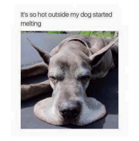 Memes, 🤖, and Dog: misto  It's so hot outside my dog started  melting  stared