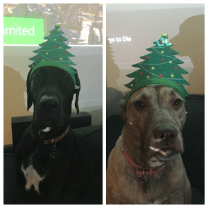 omg-images:  Silly Hat Sunday 35: Christmas Trees!: mited  ys to Die omg-images:  Silly Hat Sunday 35: Christmas Trees!