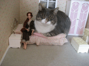 Tumblr, Blog, and How: mizzmagnet:  This is really how it feels with your cat in your bed