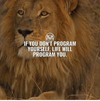 Goals, Life, and Memes: MLICHAIRE MENTOR  IF YOU DON'T PROGRAM  YOURSELF, LIFE WILL  PROGRAM YOU How do you program youself for success? 🤔 Constructing new ways of thinking and converting them into habits is no easy task. As a matter of fact, it's one of the most difficult things to do, especially as you grow older and your habits are more firmly rooted. Most of us are programmed for mediocrity. Most people are smart, educated and talented enough to be and do anything they desire. The potential is there, but it's rarely fulfilled, which leaves many people frustrated. The truth is most of us are capable of great success, yet few achieve it. We know our programming is our responsibility, and it need to be a reflection of the success we want to achieve. Bombarding your mind with positive messages of hope, inspiration and motivation is a starting point. Another strategy is listening only to people with uplifting ideas that move us closer to our goals. Reprogramming yourself for success, though, requires time and opposes societal norms, but it works and is worth the effort for every area of your life where performance is important. - Take action and change your life! - success life motivation millionairementor