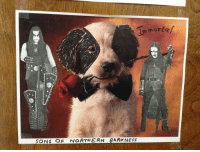 My RA at uni put puppy pictures on everybody's door. I improved mine: Sons of Northern Barkness: mm ont  SONS OF NORTHERN BARK NETS My RA at uni put puppy pictures on everybody's door. I improved mine: Sons of Northern Barkness