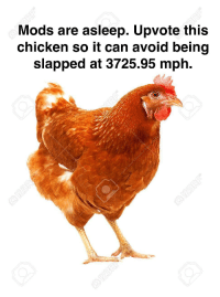 Gtg Chicken: Mods are asleep. Upvote this  chicken so it can avoid being  slapped at 3725.95 mph.