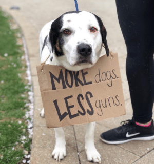 animalrates:Here is a very supportive doggo with a simple message as she marches on with her hoomans. 15/10 #MarchForOurLives: MOKE dos  LEGS  auns animalrates:Here is a very supportive doggo with a simple message as she marches on with her hoomans. 15/10 #MarchForOurLives