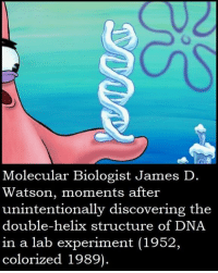 dna: Molecular Biologist James D  Watson, moments after  unintentionally discovering the  double-helix structure of DNA  in a lab experiment (1952,  colorized 1989)