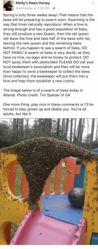 """Relatable, Collective, and Atlanta: Molly's Bees Honey  Wednesday at 1:30 PM  Spring is only three weeks away! That means that the  bees will be preparing to swarm soon. Swarming is the  way that hives naturally reproduce. When a hive is  strong enough and has a good population of bees,  they will produce a new Queen, then the old queen  will leave the hive and take half of the bees with her  leaving the new queen and the remaining bees  behind. If you happen to see a swarm of bees, DO  NOT PANIC! A swarm of bees is very docile, as they  have no hive, no eggs and no honey to protect  DO  NOT spray them with pesticides! PLEASE DO call your  local beekeeper's association and they will be more  than happy to send a beekeeper to collect the bees  Once collected, the beekeeper will put them into a  hive and help them establish a new colony  The image below is of a swarm of bees today in  Atlanta. Photo credit: Tim Spanjer of GA  One more thing: play nice in these comments or I'll be  forced to play grown up and delete you. You're all  adults. Act like it   눋  城  蠏请, """"b's.» %  we  15 ATTENTION: SAVE THE BEES"""