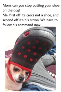 This dog is so god damm cute via /r/wholesomememes http://bit.ly/2QYDgyM: Mom: can you stop putting your shoe  on the dog!  Me: first off it's crocs not a shoe, and  second off it's his crown. We have to  follow his command now This dog is so god damm cute via /r/wholesomememes http://bit.ly/2QYDgyM