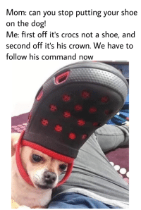 Crocs, Mom, and Dog: Mom: can you stop putting your shoe  on the dog!  Me: first off it's crocs not a shoe, and  second off it's his crown. We have to  follow his command now All glory to the Hypnodog!