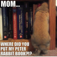 Book, Rabbit, and Mom: MOM  lohnston  WHERE DID YOU  PUT MY PETER  RABBIT BOOK91 Book bunny