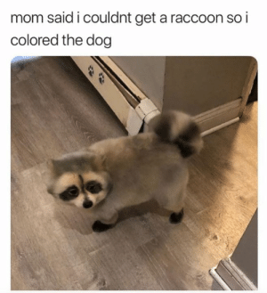 Raccoon: mom said i couldnt get a raccoon so i  colored the dog