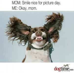 45 More Hilarious Dog Memes To Make Your Day Better - Dogtime: MOM: Smile nice for picture day.  ME: Okay, mom  dogtime.com  FIND YOUR WAG 45 More Hilarious Dog Memes To Make Your Day Better - Dogtime