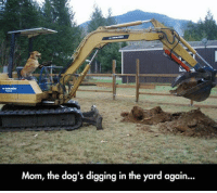 Mom, the dog's digging in the yard again... Not again!