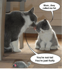 Fat and LOLcats: Mom...they  called me fat  You're not fat!  You're just fluffy You're not fat, you're just fluffy