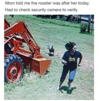 Mom told me the rooster was after her today  Had to check security camera to verify. 😂