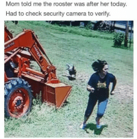 Memes, 🤖, and Rooster: Mom told me the rooster was after her today.  Had to check security camera to verify.