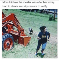 One time my mom got chased 2 blocks by a turkey and now she's scared of Turkeys and no one believes that because we live no where near turkeys ~Michaela •••••••••••••••••••••••••••••••••••• TAGS TAGS TAGS TAGS TAGS tumblrtextpost tumblrposts textpost tumblr shrek instatumblr memes posts phan funnythings 😂 same funny haha loltumblr lol relatable rarepepe funnythings funnytextposts pepeislife meme funnystuff pepe food spam: Mom told me the rooster was after her today  Had to check security camera to verify One time my mom got chased 2 blocks by a turkey and now she's scared of Turkeys and no one believes that because we live no where near turkeys ~Michaela •••••••••••••••••••••••••••••••••••• TAGS TAGS TAGS TAGS TAGS tumblrtextpost tumblrposts textpost tumblr shrek instatumblr memes posts phan funnythings 😂 same funny haha loltumblr lol relatable rarepepe funnythings funnytextposts pepeislife meme funnystuff pepe food spam