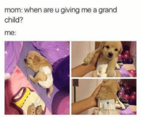 A fur baby is even better, right? RIGHT??? . . . . . lol comedydotcom meme memes funnyaf memesdaily comedy hilarious: mom: when are u giving me a grand  child?  me: A fur baby is even better, right? RIGHT??? . . . . . lol comedydotcom meme memes funnyaf memesdaily comedy hilarious