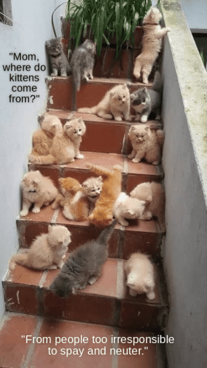 """Kittens: """"Mom,  where do  kittens  come  from?""""  """"From people too irresponsible  to spay and neuter."""""""