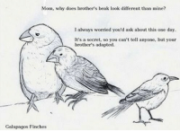 Mom, Ask, and Mine: Mom, why does brother's beak look different than mine?  I always worried you'd ask about this one day.  It's a secret, so you can't tell anyone, but your  brother's adapted.  Galapagos Finches