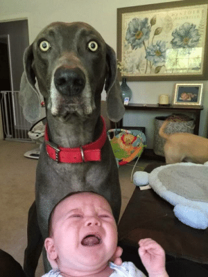 Mom! You've made a huge mistake!: Mom! You've made a huge mistake!